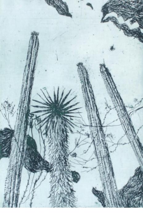 María Rosa Astorga.  Viejitos.  Carpeta de la reserva de la biósfera.  Aguafuerte y madera. Pape 69 x52 cm.  Impresión 50 x 33 cm