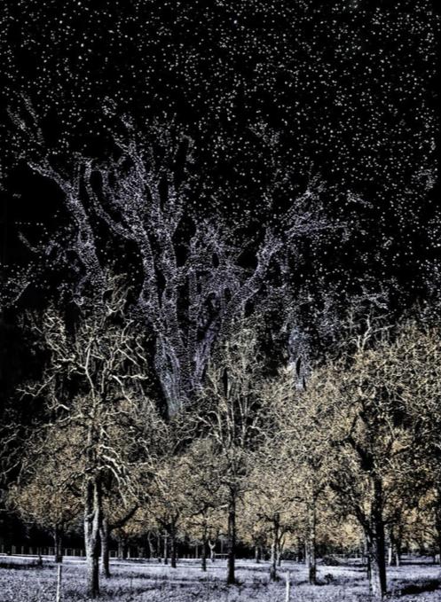 Antonio Turok.  Lluvia de estrellas.  (carpeta de la reserva biósfera.  Piezografía sobre papel de algodón.  Papel 69 x 52 cm.  Impresión 54.7 x 40 cm.